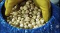 Preserved Mushrooms in SO2,Champignon Mushrooms in SO2,slices/wholes