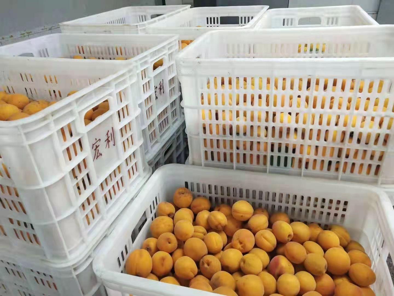 冷凍杏,速凍杏 12