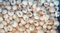 IQF Peeled Lychees,Frozen Peeled Lychees,IQF Peeled Litchi,IQF Pitted Lychees 16