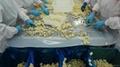 冷凍玉米筍,速凍玉米筍 5