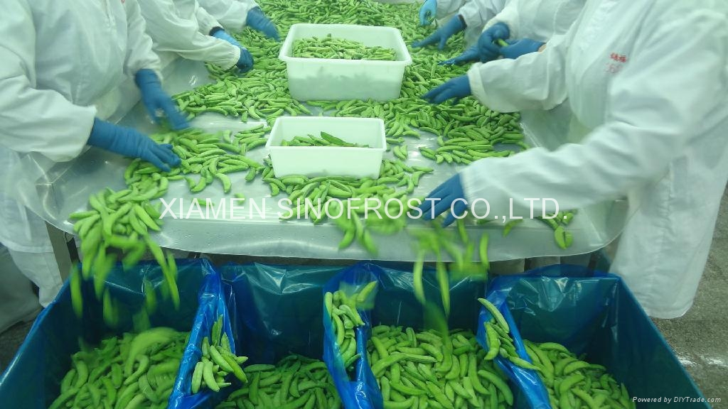 IQF sugar snap peas,Frozen sugar snap peas 3