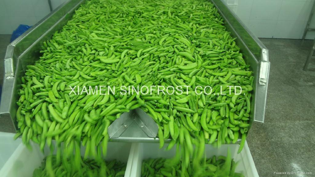 IQF sugar snap peas,Frozen sugar snap peas 4