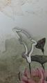 Dolphin design keychain 1607206