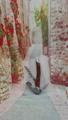 Side - side wood grain decorative wine bottle opener 1614012 4