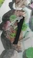 Black rectangle wine bottle opener 1614015