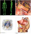 生物反馈状况分析器塔特隆NLS