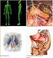 Biofeedback Health Analyzer Metatron Nls