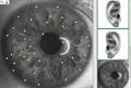 生物共振健康掃描和治療塔特隆NLS4025獵人的身體檢測 2