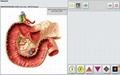 OEM/OEM available professional new Metatron Hunter 4025 NLS body health analyzer