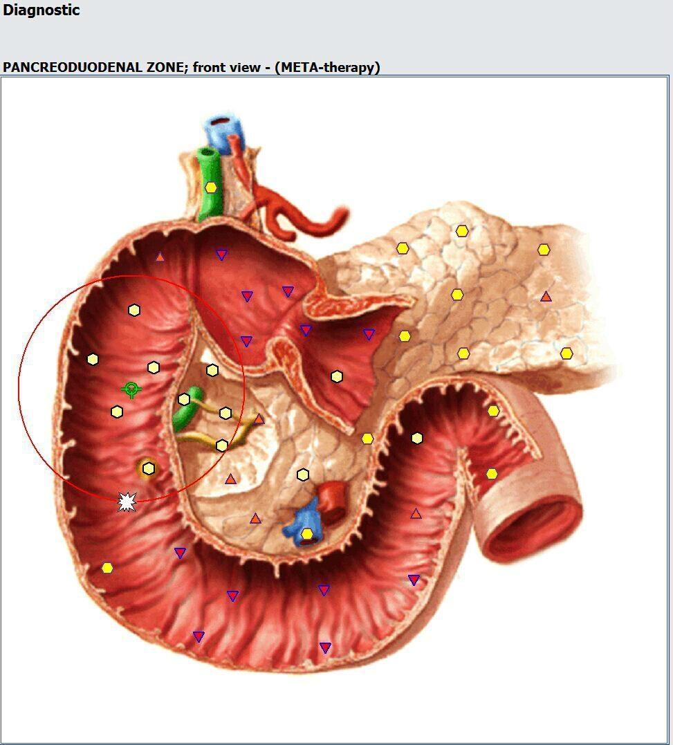 OEM/ OEM提供專業的新塔特隆獵人4025 NLS的身體健康分析儀設備 20