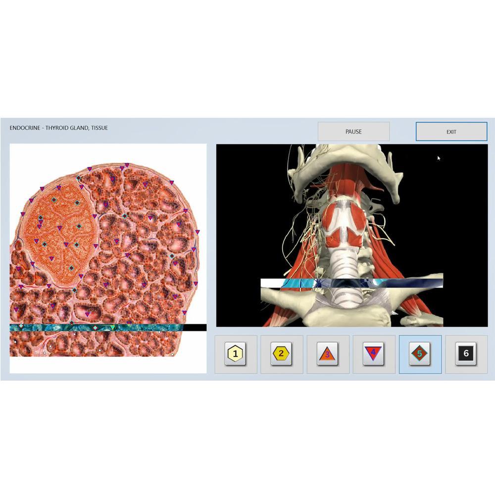 SSCH健康诊断机分析仪身体分析系统Vector V16 NLS 1