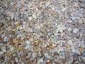 贝壳碎片 2