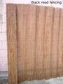 fern fence,dark reed fence,fern