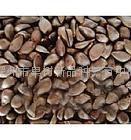 供应八棱海棠子3吨,发芽率90%以上