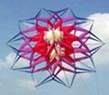 5004  Central kite