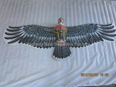 2025  Hawk
