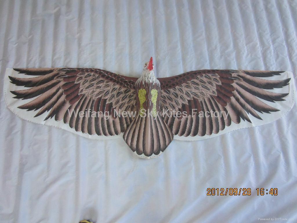 2022 Hawk