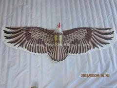 2022  雄鹰