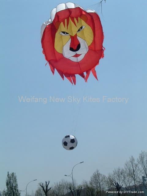 3141 Lion kicking football