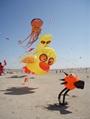 3290  沙滩鸟
