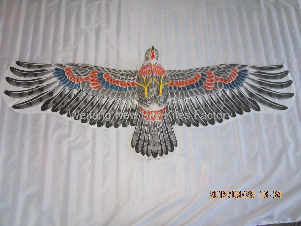 2026 Hawk