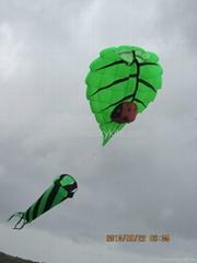 3182 樹葉風箏