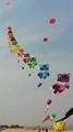 3235  Small tiger kite 1