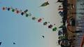 3235 小老虎 風箏