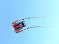 3119 Trilobite kite