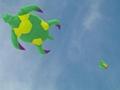 3252 海龜