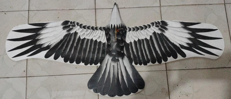 2165 盘鹰 1