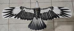 2165 盘鹰