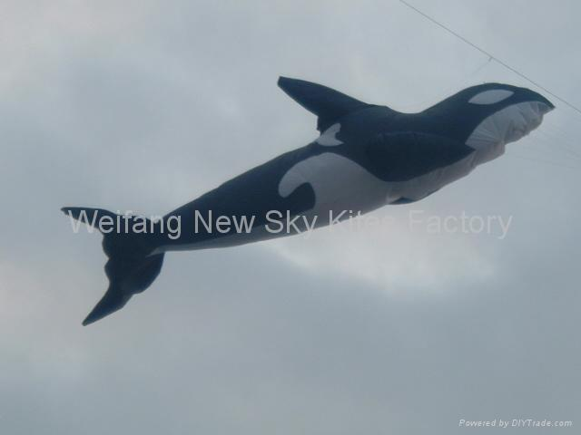 3208虎鲸 3