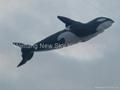 3208虎鯨