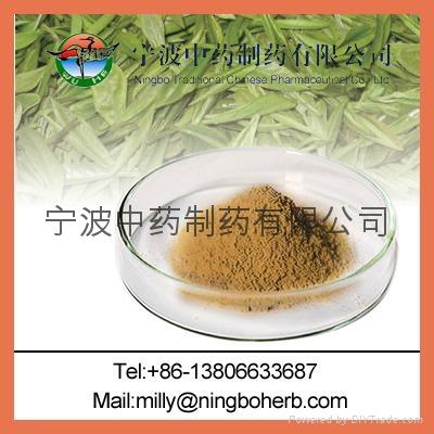 GreenTea Extract 1