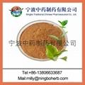 GreenTea Extract 2