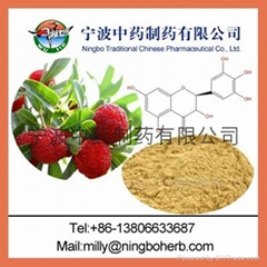 Chinese Waxmyrtle Extract