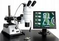 立体显微镜