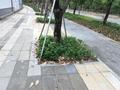 石材廠家熱銷樹圍石 新款倒角樹