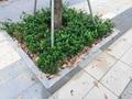 樹圍石廠家熱賣新款樹圍石 倒角樹坑石 樹池石 市政工程專業供應商  全程為您服務
