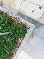 定制树坑石_定制树坑石批发采购_定制树坑石价格多少钱_定制树坑石    定制厂家优力石