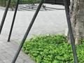 港深廣石材是專業生產廠家歡迎咨詢樹池石 花崗岩樹池石 鵝卵石砌牆過程 樹池石圖片 混凝土樹池石 水洗石批發 路牙石多少錢一米 樹池石規格 水洗石水泥施工視頻    石材等相關問題 我們有專業的石材工程師對 規格,設計,安裝,技術,價格、用途等等方面的問題給予全面的解答,只要您撥打/微信∶13632765059, 公司專業團隊為您提供一纜子完善解決方案。