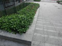 深圳市政路沿石廠生產各種規格S型路沿石 立道牙