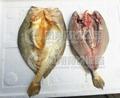 FGB-170 剖鱼片机 鱼类开片机