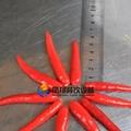 (FC-305) Pepper Slicing Machine/ Chilli Cutter/ Pepper Cutting Machine & Video 2
