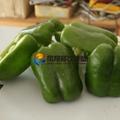 (FC-305) Pepper Slicing Machine/ Chilli Cutter/ Pepper Cutting Machine & Video 5