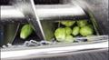 (LXTP-3000) 螺旋出料式萝卜土豆清洗去皮机 & 视频