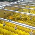 (HP-360) Fruit Washing and Drying Machine 4