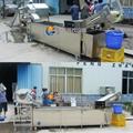 高麗菜切丁清洗生產線 3