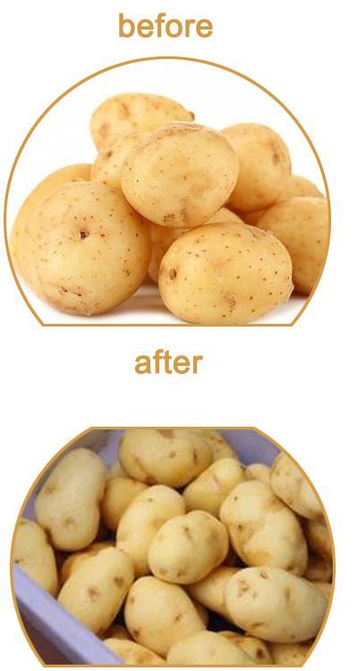 PX-1500 高壓噴淋式土豆清洗拋光機 3
